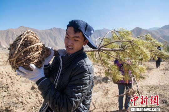 3月24日,西藏拉萨曲水县才纳乡四季吉祥村义务植树点志愿者们领取树苗。 何蓬磊 摄