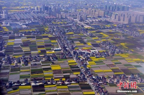 资料图:盛开的油菜花和田间农作物将大地装扮得多姿多彩。<a target='_blank' href='http://www.chinanews.com/'>中新社</a>记者 毛建军 摄
