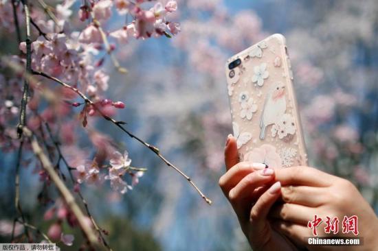 当地时间3月29日,日本民众前往东京公园内赏樱。