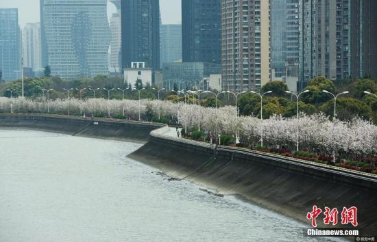 资料图为:杭州钱塘江畔的最美跑道。龙巍 摄 图片来源:视觉中国