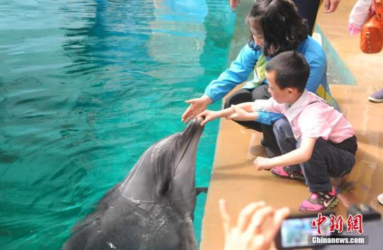 孤独症儿童与海豚、白鲸亲密接触。王力鹏 摄