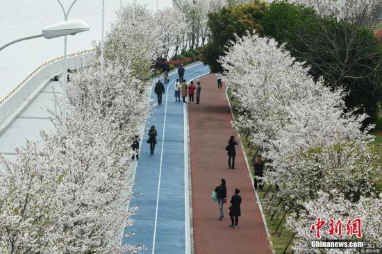 """钱塘江畔""""最美跑道""""变身樱花大道。龙巍 摄 图片来源:视觉中国"""
