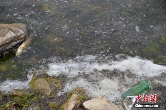 资料图:湖边漂浮的垃圾与死鱼。中新社记者 缪超 摄