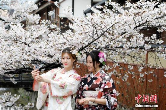 当地时间4月7日,日本京都樱花盛放,民众身着和服赏樱。