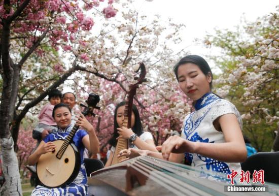 4月7日,北京玉渊潭公园晚樱盛开,民乐演奏家现场弹奏为观众助兴。中新社记者 杜洋 摄