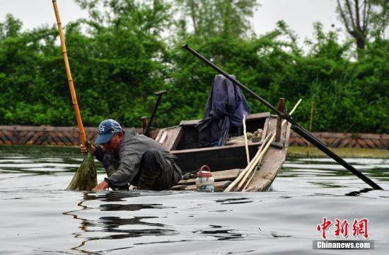 4月16日,雄安新区白洋淀,一位捕鱼人正在忙碌。 中新社记者 翟羽佳 摄