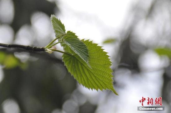 研究發現:在過去的250年里已有近600種植物從野外消失
