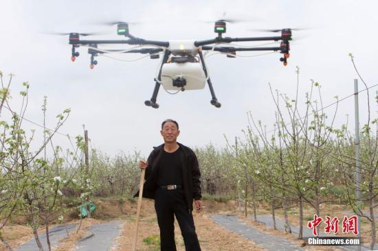 4月末,正是苹果花盛开的季节,十余架白色无人机在果园上空盘旋,这种高效、便捷的方式受到当地果农追捧。据介绍,这些无人机属于大疆内蒙古禾文植保队。从4月起,禾文植保队将在山西临汾吉县连续工作3个月,为山西临汾吉县5万亩苹果树提供植保服务。未来,当地将通过政企合作的方式,探索使用无人机管理苹果生产全过程。张云 摄