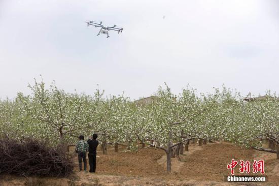 资料图:苹果园。张云 摄