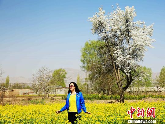 资料图:四月末,随着气温逐渐升高,甘肃永靖县川塬区的梨花、油菜花在蓝天白云下竞相绽放。郭红 摄