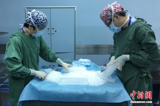资料图:器官移植中心的医护人员在手术室里紧锣密鼓的准备着。