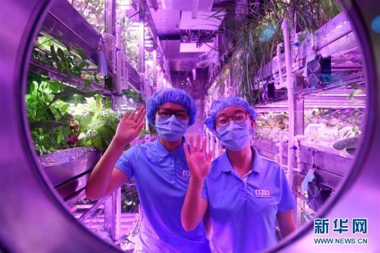 """第一组两名参与实验的志愿者在""""月宫一号""""的植物舱内向舱外致意。""""月宫一号""""由一个综合舱、两个植物舱组成。植物舱内的三层植物架上种满了各种作物,有生菜、茄子等等。 新华社记者 鞠焕宗 摄 图片来源:新华网"""