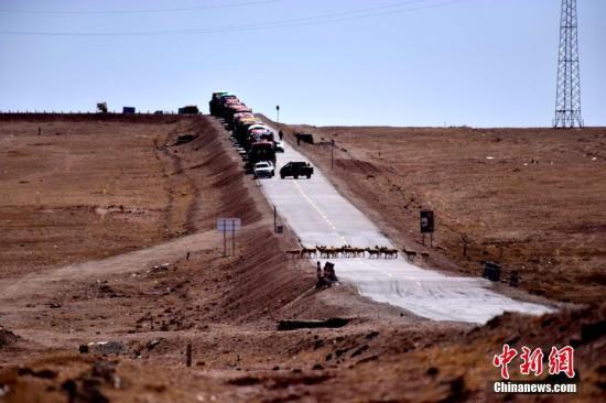 从5月13日开始,聚集在三江源保护区怀孕的母藏羚羊在可可西里国家级保护区管理局工作人员以及环保志愿者的共同保护下,顺利通过青藏公路,向可可西里腹地卓乃湖迁徙产仔。截至18日,已有近400多只藏羚羊顺利通过青藏公路109国道。图为15日,藏羚羊通过青藏公路。中新社记者 孙燕初 摄