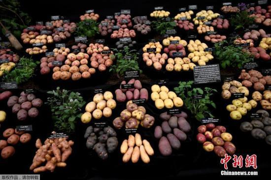 资料图:展会上的土豆。