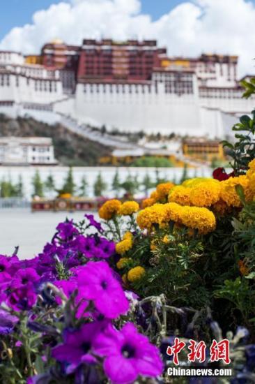 资料图 5月25日,布达拉宫广场盛开的万寿菊。5月的拉萨,天气转暖,布达拉宫脚下、大昭寺广场鲁冰花、万寿菊等竞相开放,绚丽多彩。西藏因其旅游资源丰富、独特,一直成为国内外游客的向往之地。每年的5月至10月是西藏旅游的黄金季节。中新社记者 何蓬磊 摄