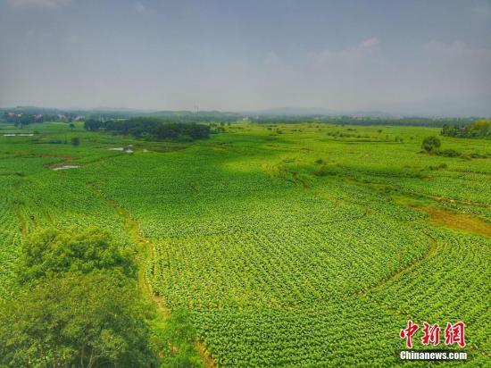 农田资料图。华山 摄