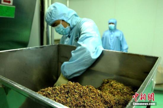 青海启动多项藏医药学传承与创新科研计划