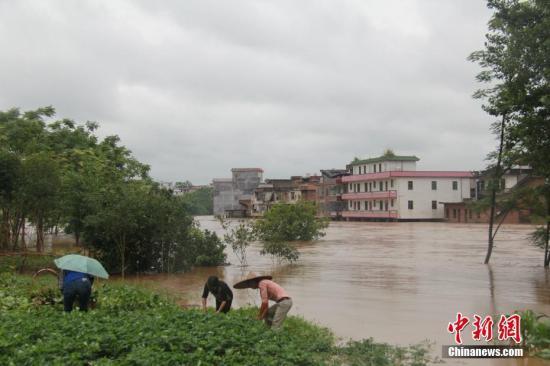 暴雨袭击湖南嘉禾,部分农田被水淹街道变河流。6月6日,雨后村民在抢救农作物。邓和明 摄