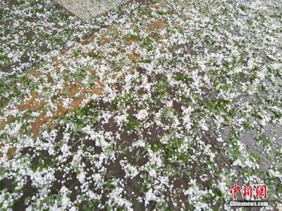 白银城区遭遇冰雹天气。 张其文 摄