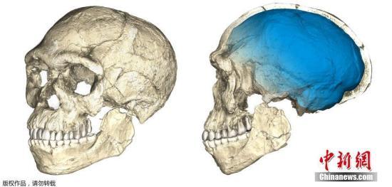 资料图:摩洛哥西北部挖出的早期人类化石遗骸,其中包括一个不完整的头骨和一个下颌。