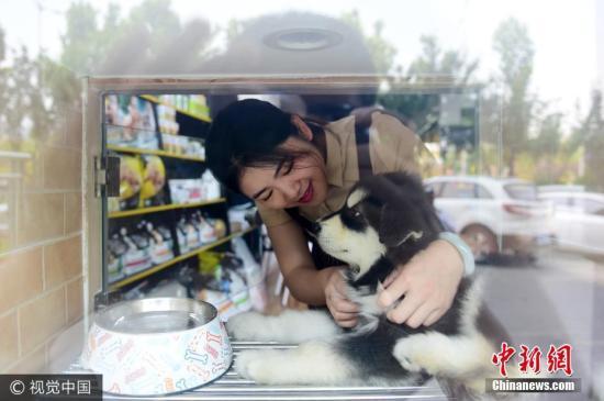 资料图:宠物狗。图片来源:视觉中国