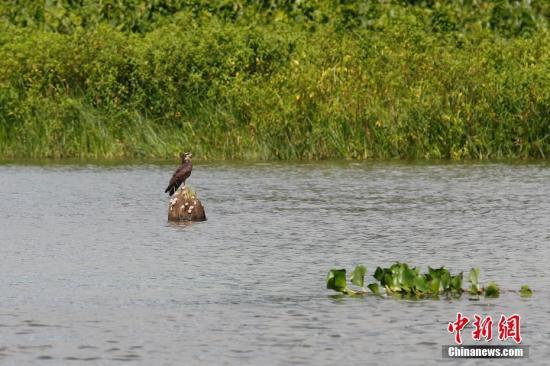 资料图:巴拿马运河。 中新社记者 余瑞冬 摄