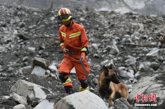 6月25日,消防人员带领搜救犬展开救援。6月24日,四川茂县叠溪镇新磨村新村组富贵山山体垮塌,大批救援人员正在现场全力展开搜救等工作。 绵阳消防 供图