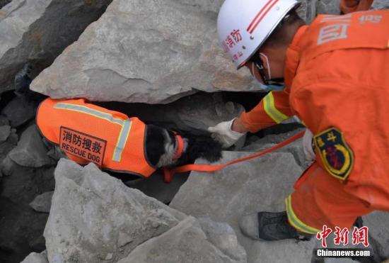 搜救犬在现场作业。中新社记者 刘忠俊 摄