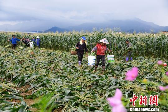 商务部:农产品关税配额管理符合中国入世承诺