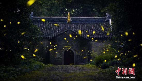 资料图:萤火虫。/p中新社发 苏阳 摄 图片来源:CNSPHOTO