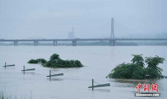 长沙湘江路沿江风光带上的大树与路灯被淹。 中新社记者 杨华峰 摄