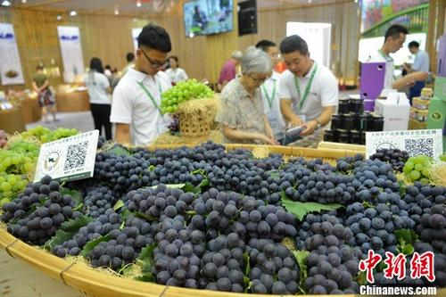 资料图:在现代农业博览会上,市民参观特色水果。 中新社记者 张浪 摄