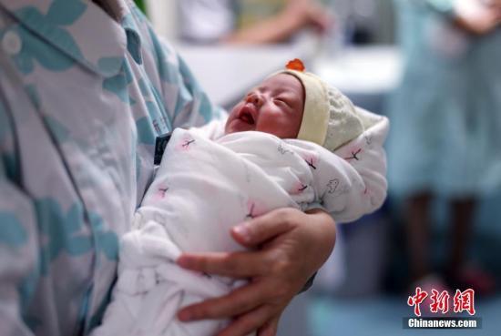 7月4日,经过一个月时间住院观察,成都22岁年轻妈妈曲兰同自己产下的三胞胎康复出院。6月10日,自然受孕的曲兰经过30多分钟的剖宫产手术,分别于8时56分、57分、58分在成都第五人民医院诞下3名女婴:大宝1760克(3.52斤)、二宝1360克(2.72斤)、小宝1670克(3.34斤)。据了解,罕见单卵三胞胎在人类生育史上十分罕见,几率小于百万分之一。 钟欣 摄