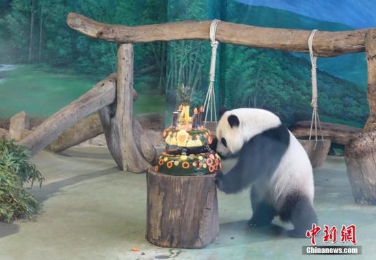 7月6日,是大陆赠台大熊猫团团、圆圆的长女圆仔4岁生日。台北市立动物园为它准备了生日蛋糕。 记者 路梅 摄
