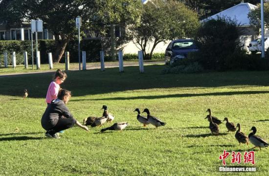 当地时间7月9日,澳大利亚悉尼迎来艳阳天,市民纷纷到郊外享受冬日暖阳。图为喂野鸭子的孩子们。 中新社记者 陶社兰 摄