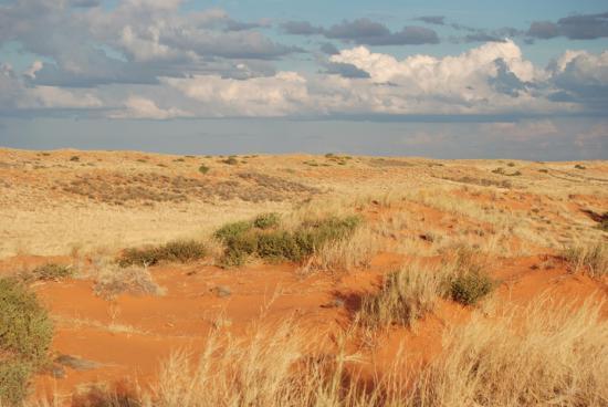 资料图:蔻玛尼(Kohmani)文化景观位于南非北开普省的北部地区,毗邻博茨瓦纳和纳米比亚的边界。这片广袤的沙漠地带包含了Khomani San人从石器时代到现代人类丰富的历史,文化习俗,自然地貌的变迁以及Khomani San人自然生存与繁衍的智慧。 Francois Odendaal Productions供图 图片来源:联合国教科文组织世界遗产中心官网