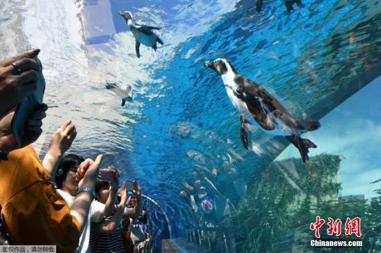 """资料图:东京池袋""""阳光水族馆(Sunshine Aquarium)吸引众多游客。"""