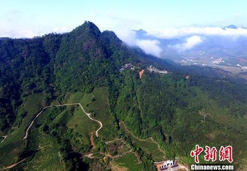 资料图:福建武平县丰富的林业资源。 中新社记者 王东明 摄