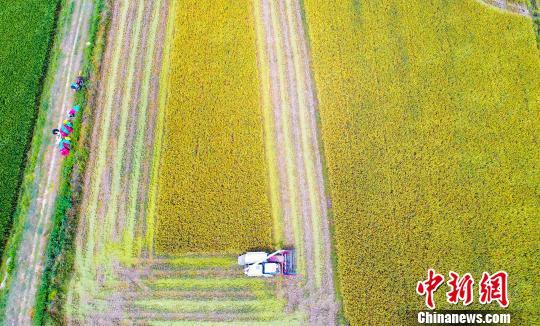 11部门联合发文 部署开展农民合作社规范提升行动