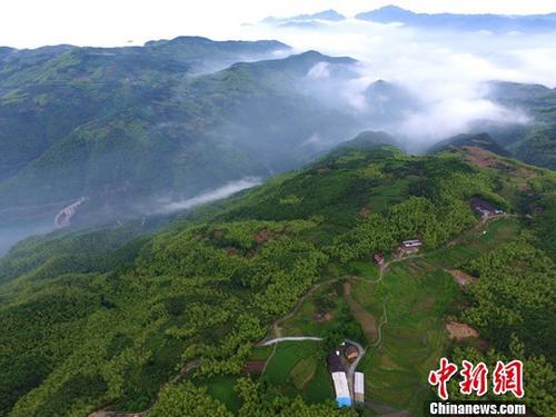 资料图:位于福建福鼎的大洋山森林公园。<a target='_blank' href='http://www.chinanews.com/'>中新社</a>记者 王东明 摄