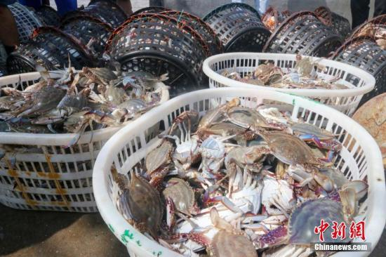 资料图:渔运船满载着约7.5吨梭子蟹。记者 余若望 摄