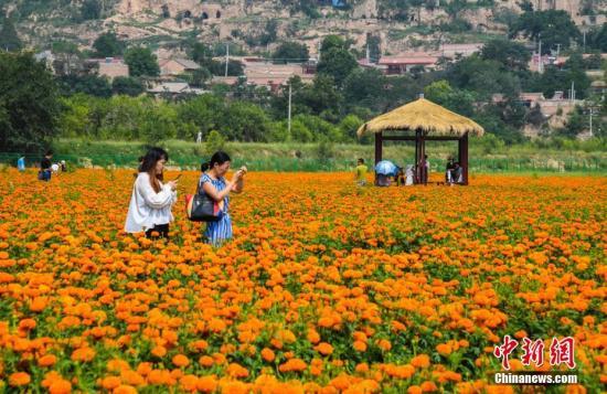 游客赏菊资料图。徐振华 摄
