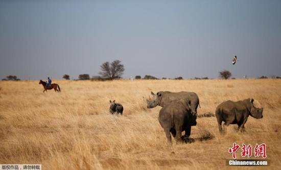 资料图:非洲草原