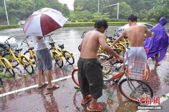 """台风""""天鸽""""来袭 深圳共享单车被大风刮倒。 中新社记者 陈文 摄"""