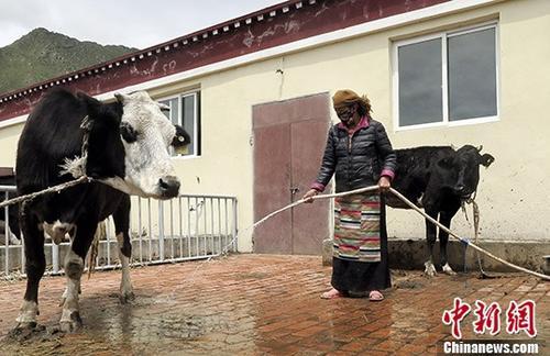 """从拉萨河畔看西藏易地搬迁后的""""产业""""扶贫"""