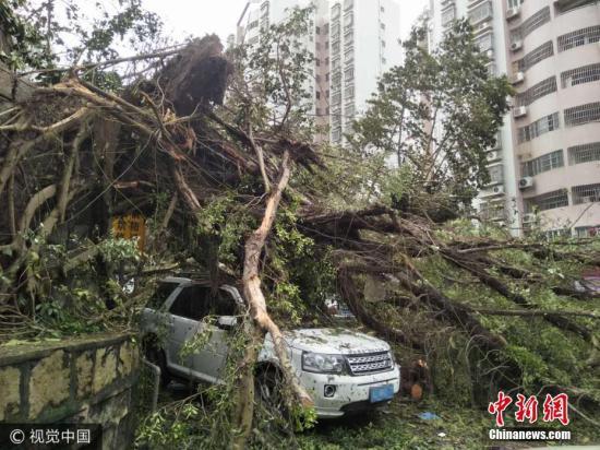 """2017年8月24日,广东珠海,超强台风""""天鸽""""过后,部分路段大树倒塌。 于燕敏 摄 图片来源:视觉中国"""