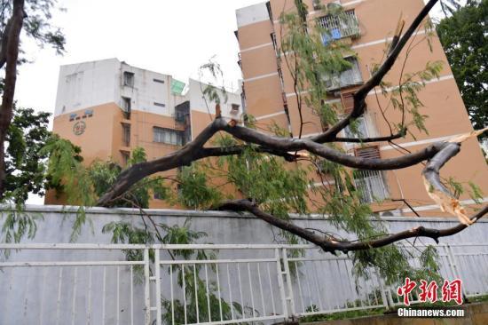 台风资料图。<a target='_blank' href='http://www.chinanews.com/'>中新社</a>记者 陈文 摄