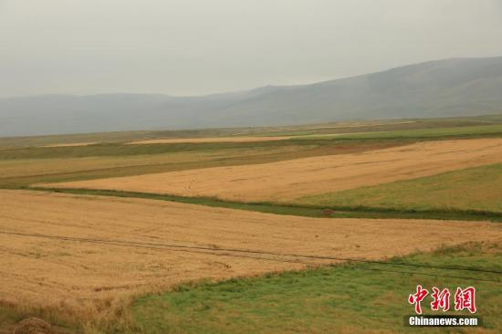 资料图:小麦田。 李文武 摄
