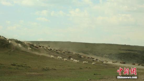 资料图:9月13日,位于新疆天山西部的伊宁县牧民正赶着一群群牛、羊、马,从托乎拉苏山区牧场转场。 史玉江 摄