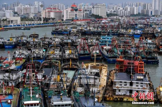 """9月14日,海南省海口市新港码头停靠了众多回港避风的船只。今年第19号台风""""杜苏芮""""(强热带风暴级)的中心14日11时距离海南省三亚市东南方向约340公里,中心附近最大风力有11级(30米/秒),中心最低气压为980百帕。据海南省""""三防办""""统计,截至14日12时40分,全省已有24405艘渔船回港避风,7艘渔船还在回港途中,692艘渔船在外省港口避风。渔船鱼排上岸人员已达到76026人。 中新社记者 骆云飞 摄"""